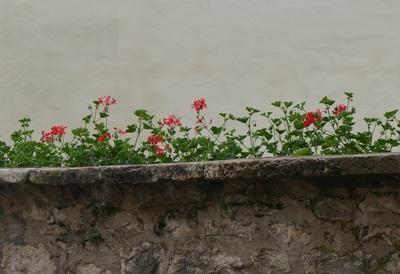 Auf der Mauer ...