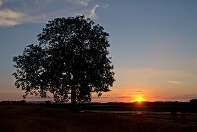 Abends in den Feldern