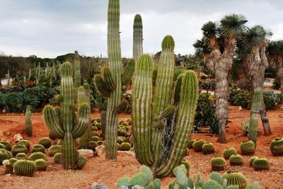 Bonicactus Garten Mallorca
