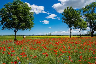 Rotes Feld (2)