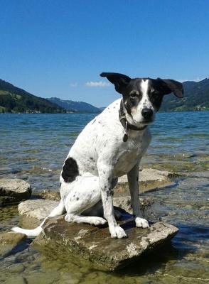 Rettungshund am Alpsee