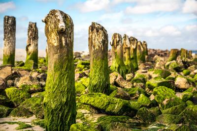 leuchtend grüne Buhnen
