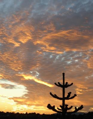 Einsamer Baum vor dem Abendhimmel