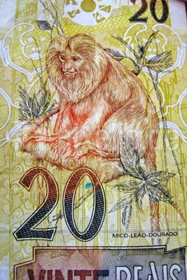 brasilianischer Zwanzig Real Geldschein mit einem goldenen Löwenäffchen