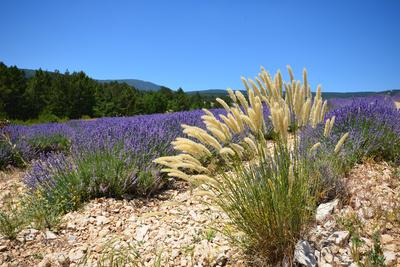 C'est la Provence