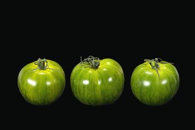 Tomate 102