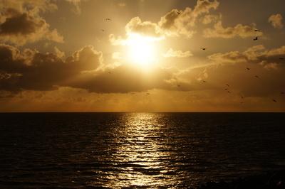 Ein Schwarm Möwen fliegt gen Sonnenuntergang