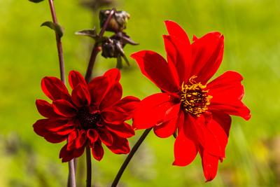Feurige Blüte