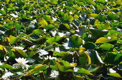Das Blättermeer