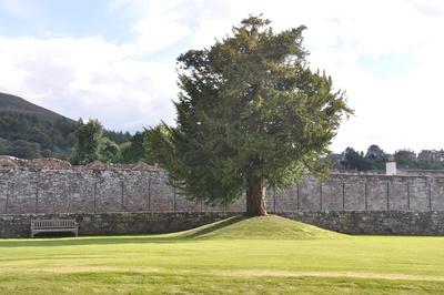 Baum auf dem Gelände der Melrose Abbey