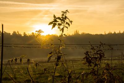 Im Morgenlicht (2)