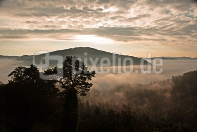 der Nebel kriecht den Berg empor....