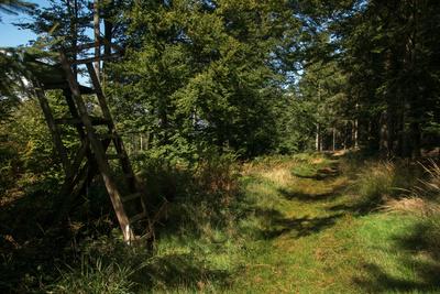 Wanderung im Eggegebirge, Waldweg III