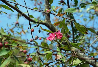 Wiener Herbstblüten