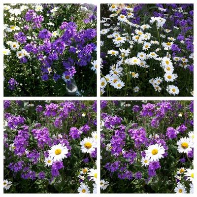 Bunte Blumen - Collage