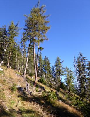 Herbstlicher Gebirgswald