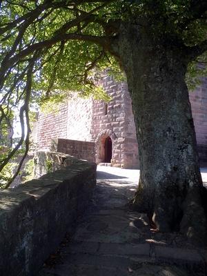 Burg Trifels mit Baum