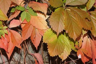 Bunte Blätter im Herbst III