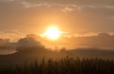 Lautlos zieht der Morgennebel übers land....