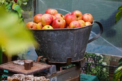 Apfelernte - dekorativ mit alter Waage