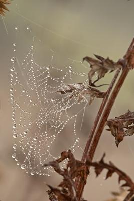 Silberfäden und Wasserperlen