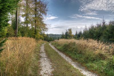 Der Teutoburger Wald im Oktober I