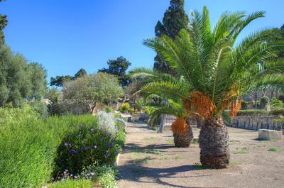 Palmen in Valletta