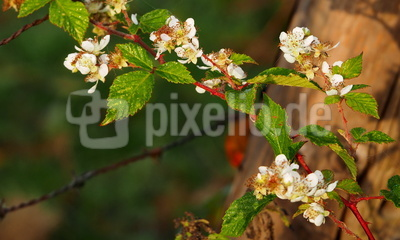 blüte im oktober
