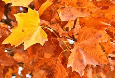 Der Herbst hat viele Farben