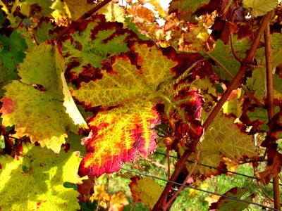 Bunte Herbstfärbung