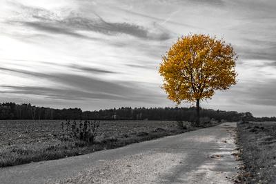 Herbst - Grau und Bunt