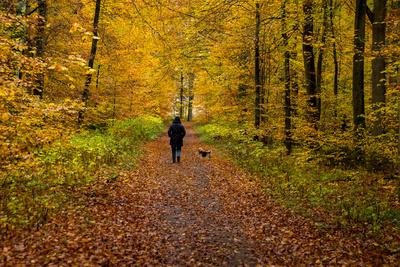 Herbstlich auch ohne Sonne
