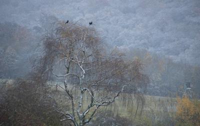 Diesiger kalter Herbstmorgen leicht weiß gepudert