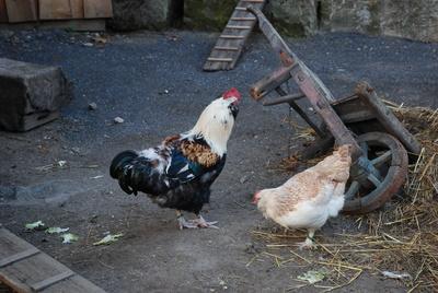 Vogelgrippe 02