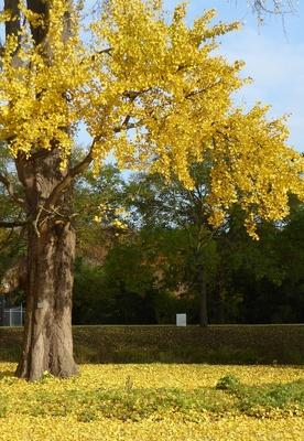 Herbstblätter oben und unten