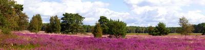Heide Landschaft Panorama