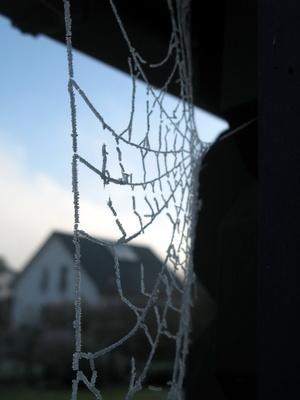 Netz der Spinne im November