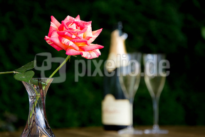 Eine Rose zum Aperitif