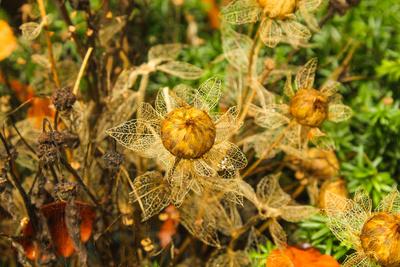 Blume im Herbst