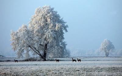 Anfang Dezember - Der Winter ist eingekehrt