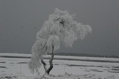 Winterbaum  im  Sauerland
