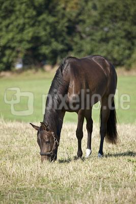 Pferde im Ruhrpott