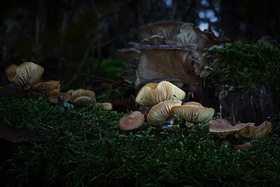 Licht im Tal der Pilze
