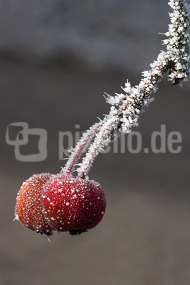Winterobst