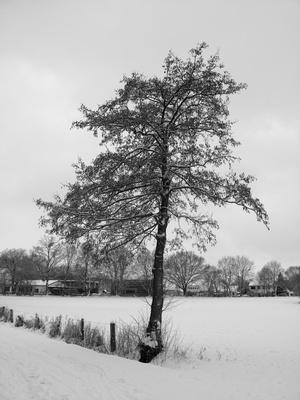 Baum im Winter - S-W