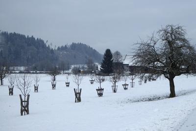 Junge Obstbaumplantage