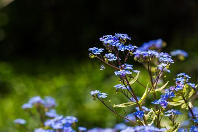 Frühlingsgrüsse in blau