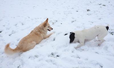 beste kumpel im schnee