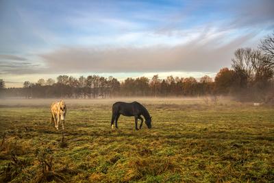 Morgens auf der Weide (2)