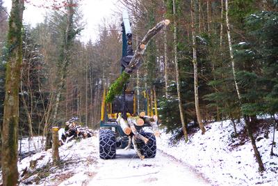 Forstarbeit im Winter